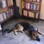 Dog-parking in Biblioteca